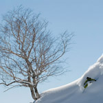 Hakuba-Goryu-backcountry-tree