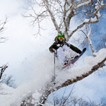 skiing-a-Hakuba-tree