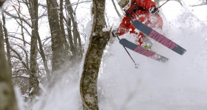 Tsugaike Tree skiing